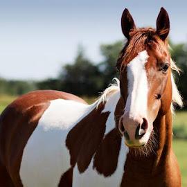 by Kris Davis - Animals Horses