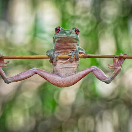 Morning Exercise.... by Vincent Sinaga - Animals Amphibians ( frog, amphibian, exercise, green frog, animal )