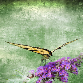 In for the landing by Melissa Davis - Digital Art Animals ( butterfly, butterfly bush, backyard, yellow swallow butterfly, flowers )