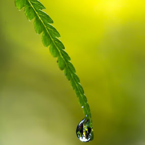 Dew drop and leave by Calvin Chan - Nature Up Close Water