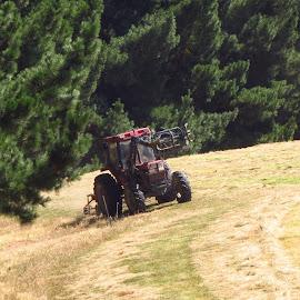 Tractor Tedding by Russell Benington - Transportation Other ( farm, hay, international, tedding, nz, tractor,  )