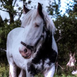 by Jimi Neilson - Animals Horses
