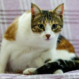 by Veli Toluay - Animals - Cats Portraits ( kedi )