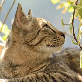 by Shardul Toro - Animals - Cats Portraits