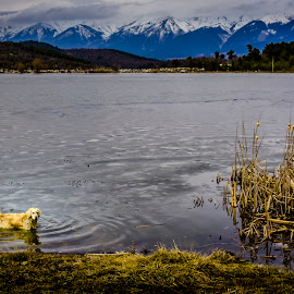 doggying in the icy water by H. OGUT - Animals - Dogs Playing