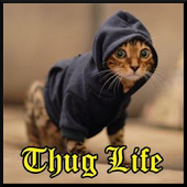 Free Download Thug Life Funny Videos APK for Samsung