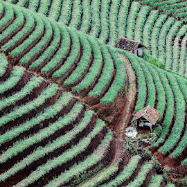Panyaweuan Majalengka West Java by Bernard Tjandra - Landscapes Prairies, Meadows & Fields