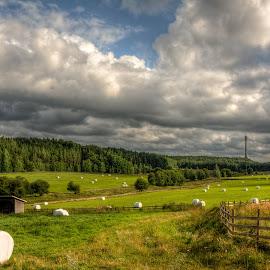 by Bojan Bilas - Landscapes Prairies, Meadows & Fields