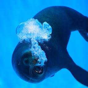 Foca by Pedro Barreiros - Animals Sea Creatures ( zoo, 2011, pmbarreiros, 5d )