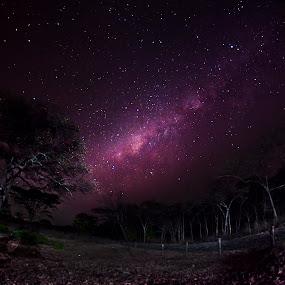 Baluran National Park East Java by Ben Bebe - Landscapes Starscapes