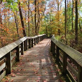 A Fall Walkway by Paul S. DeGarmo - Buildings & Architecture Bridges & Suspended Structures ( structure, park, colorful, fall, walkway )