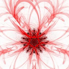 Red Flower by Nancy Bowen - Illustration Flowers & Nature ( sketch, red, dark, white background, light, flower )