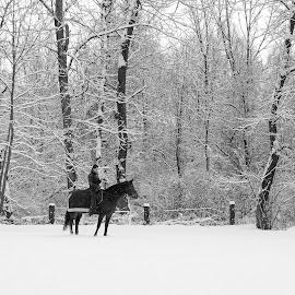 Snow by Aleksandra Jereb - Sports & Fitness Other Sports ( horseback riding, sneg, horse, snow, white, morning, early ride )