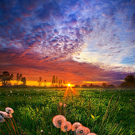 All Changeful As The Light  by Phil Koch - Landscapes Prairies, Meadows & Fields ( vertical, farmland, yellow, dandeelions, leaves, love, sky, tree, nature, weather, perspective, light, orange, twilight, art, agriculture, horizon, portrait, environment, dawn, serene, trees, lines, inspirational, wisconsin, natural light, ray, landscape, phil koch, spring, sun, photography, farm, life, horizons, inspired, clouds, office, park, seed, scenic, morning, shadows, field, red, blue, sunset, amber, peace, meadow, summer, beam, earth, sunrise, garden )