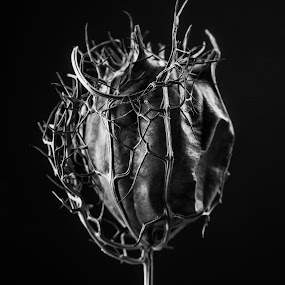 Darkness by Alex Nicholson - Nature Up Close Other plants ( dried seeds )