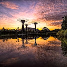 by Gordon Koh - City,  Street & Park  City Parks