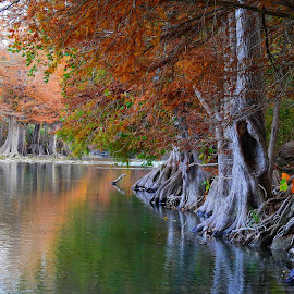 Fall on the Guadalupe River by Cathy Hood - Landscapes Waterscapes
