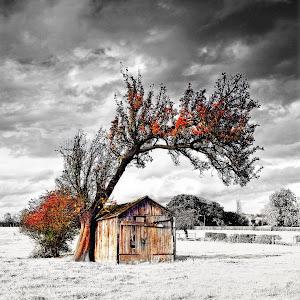 Old Tree (HDR).jpg