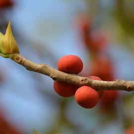 by Biswarup Mandal - Food & Drink Fruits & Vegetables