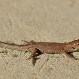 by Daniel Grigoras - Animals Reptiles
