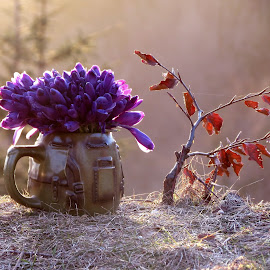 by Janeta Sandutu - Nature Up Close Other plants ( branduse, primavara, munte, branduse munte )