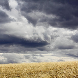 Spring Rain Clouds On The Praire Grass by Brian Robinson - Landscapes Prairies, Meadows & Fields