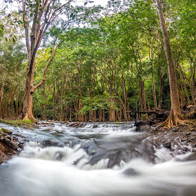 raw element  by Donnyfer Philippe - Landscapes Forests ( indian ocean, canon, canon camera, don, mauritius, donnyfer, long expo, travel, wide, beautiful nature, exploration, trip into nature, nature, trip, tripod, natural, river )