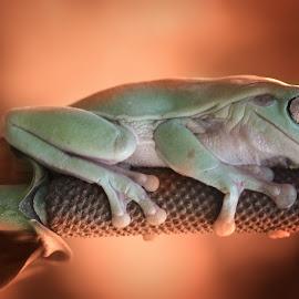 Sleep Tight by Muhammad Ridha - Animals Amphibians