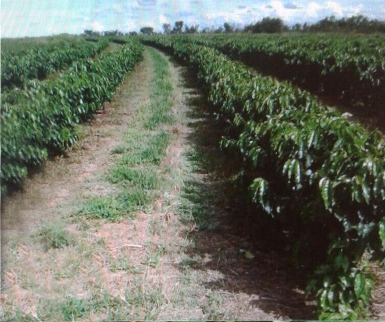 Fazenda rural à venda, Zona Rural, São Desidério.
