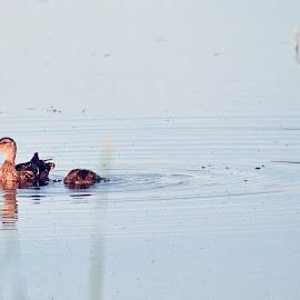 Shovler by Jaliya Rasaputra - Animals Amphibians