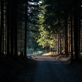 The path towards the light by Mihaela Ciulea - Landscapes Forests ( nature, pathway, trees, forest, light, shadows )