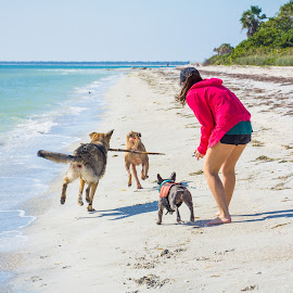 caroline participates by Meaghan Browning - Animals - Dogs Playing ( water, fetch, girl, dogs, beach, group )