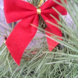 Bows of Green by Lenora Popa - Public Holidays Christmas ( holiday, macro, nature, green, christmas )