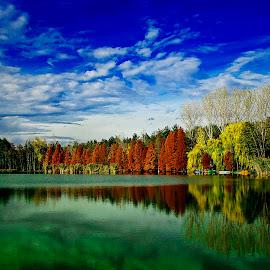 by Nedelcu Valeriu - Landscapes Forests