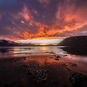 Colorful Sunset by Benny Høynes - Landscapes Sunsets & Sunrises ( canon, water, red, bennyhøynes, colors, sunset, vesterålen, andøy )