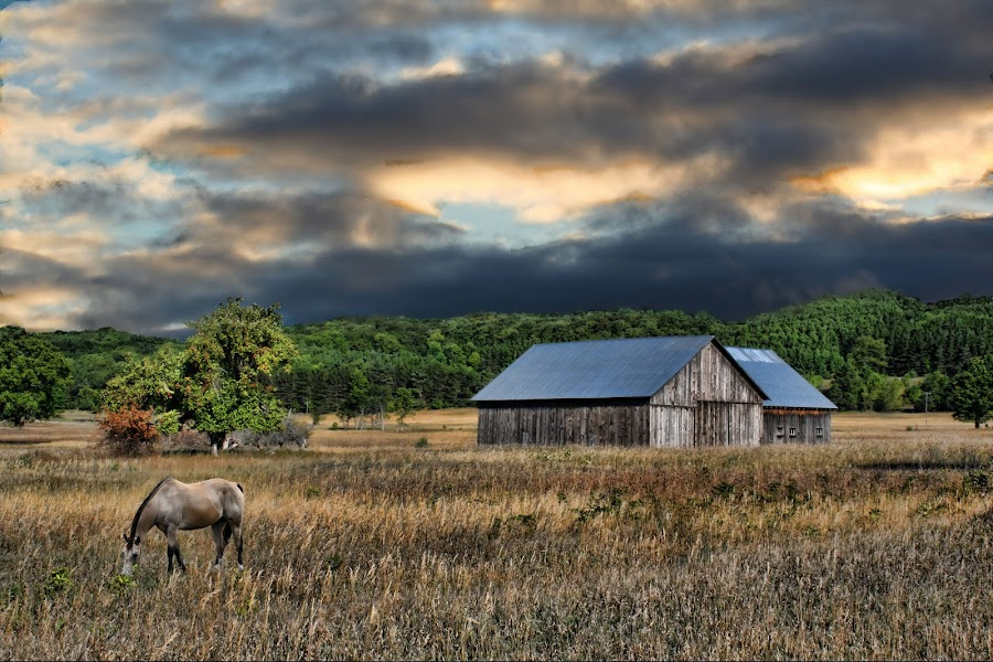 Grazing by Dennis Granzow - Landscapes Prairies, Meadows & Fields