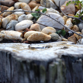 Rocks and trunk by Shalimar Rodriguez de Paez - Nature Up Close Rock & Stone