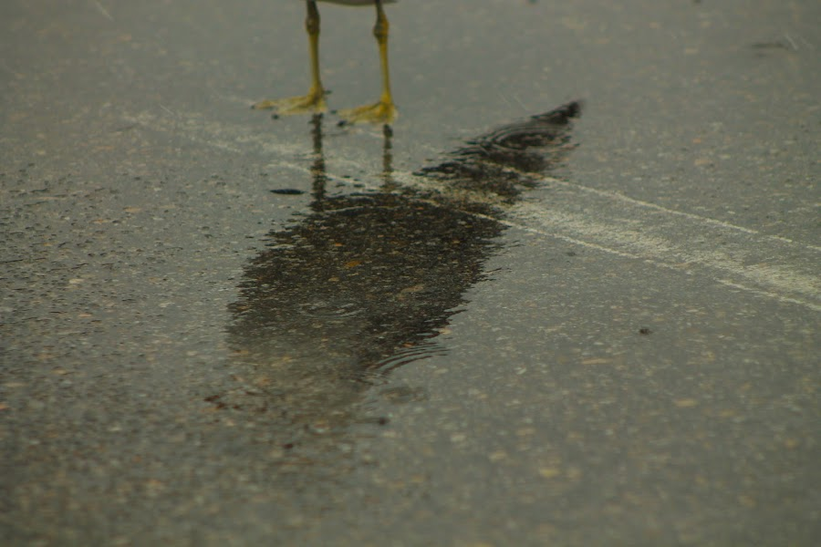 Reflections by Jay Woolwine Photography - News & Events Weather & Storms ( water, reflection, puddle, storm, rain, sidewalk )