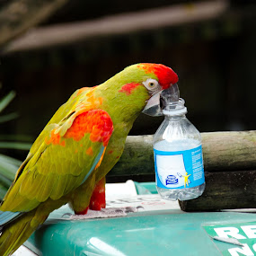 Recycling Parrot by Steven Greenbaum - Animals Birds ( bird, recycling, zoo, colorful, parrot )