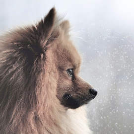 rain rain rain  by Michael  M Sweeney - Animals - Dogs Portraits ( doggie, dog portrait, dog )