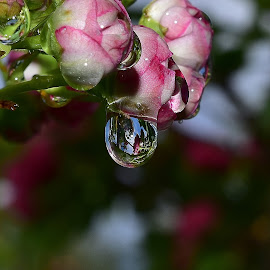 Crystal clear water drops. by Denton Thaves - Nature Up Close Natural Waterdrops ( waterdrop )