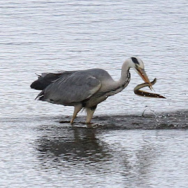 Fishing by Chris Mcgurgan - Novices Only Wildlife