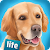 DogHotel : My Dog Boarding Kennel file APK for Gaming PC/PS3/PS4 Smart TV
