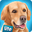 DogHotel Lite: My Dog Boarding APK for Blackberry