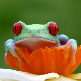 Sitting comfortably by Angi Wallace - Animals Amphibians