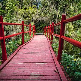 Red Bridge by John Graham - Landscapes Waterscapes ( summer, plantation, garden )