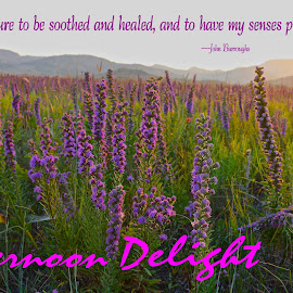 Afternoon Delight by Kathy Suttles - Typography Quotes & Sentences ( field, wildflowers, peaceful, nature, purple, oklahoma, healing )