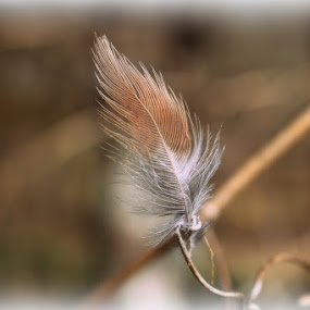 by Crystal  Wilson - Nature Up Close Other Natural Objects (  )