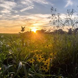 Walworth County Sunset by Jason Lockhart - Landscapes Sunsets & Sunrises ( wisconsin, grass, sunset, walworth county, flowers )
