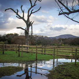 Reflections after the rain by Rob Mousley - Landscapes Prairies, Meadows & Fields ( commonage, noordhoek, south africa, landscape, cape town )
